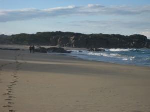 beach bingi dreaming track
